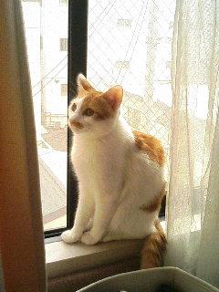 image/shimanblog-2005-10-26T12:34:17-1.JPG